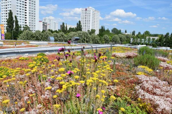 Eine begrünte Dachfläche mit Blumen und Gräsern