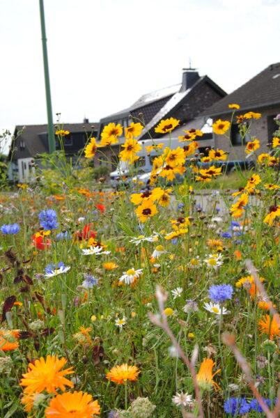 Bunte Wildblumen vor dem Haus