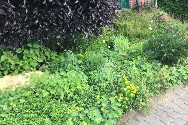 grüner Vorgarten